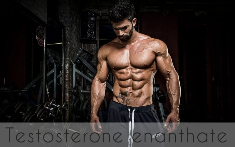 Testosterone Enanthate – the king of Anabolic Steroids